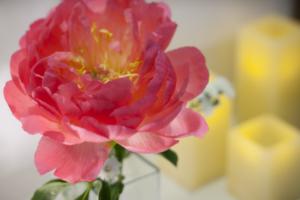 バリの花の写真